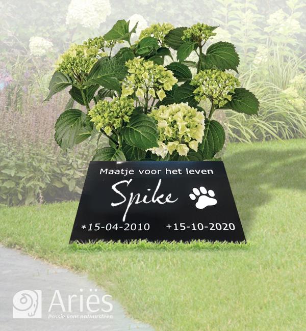 Gedenkplaat voor uw hond of kat